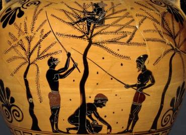 Greek Olive Oil History